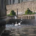 Brunnen im Pomeranzengarten (Foto: Thomas Drauz)